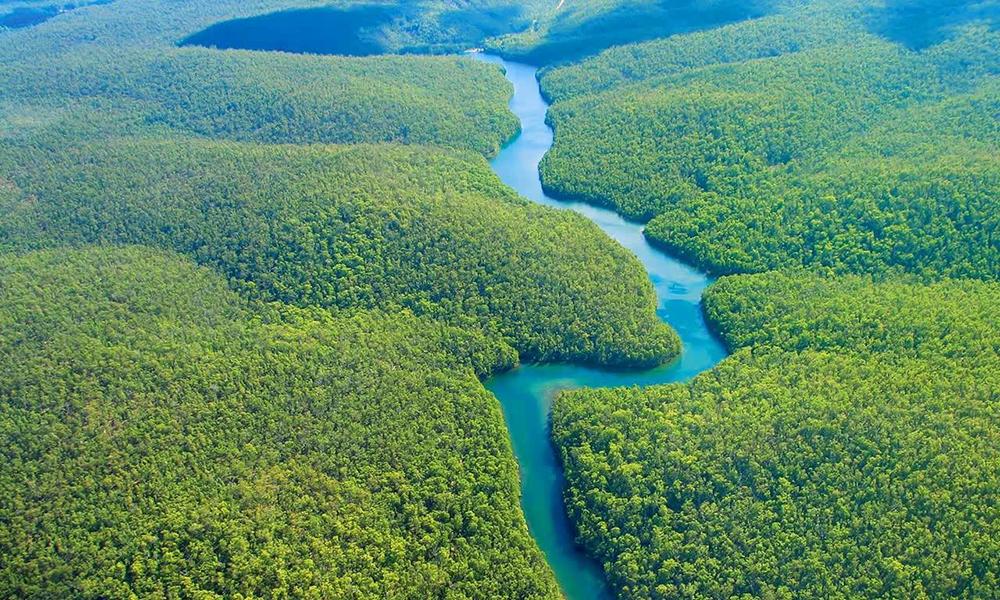 ліси Амазонки, Бразилія