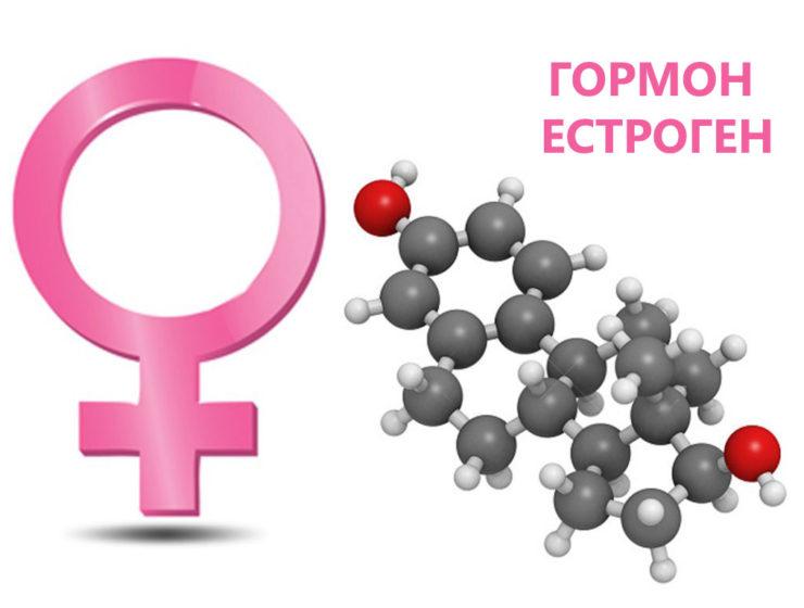 естроген