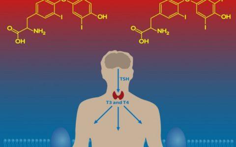 низький рівень тироїдних гормонів